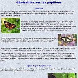 Généralités sur les papillons