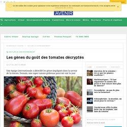 Les gènes du goût de la tomate décryptés