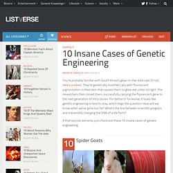 10 Insane Cases of Genetic Engineering
