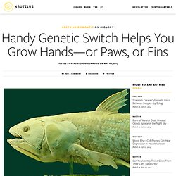 Handy Genetic Switch Helps You Grow Hands—or Paws, or Fins - Blog