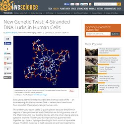 New Genetic Twist: 4-Stranded DNA Lurks in Human Cells