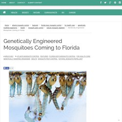Genetically Engineered Mosquitoes Coming to Florida