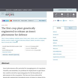 NATURE 25/06/15 The first crop plant genetically engineered to release an insect pheromone for defence
