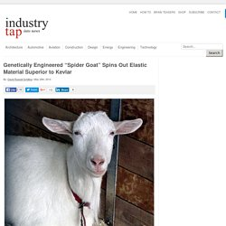 """Genetically Engineered """"Spider Goat"""" Spins Out Elastic Material Superior to Kevlar"""