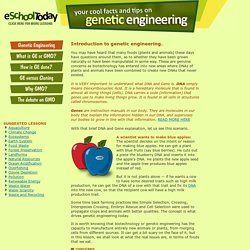 Genetically engineered foods explained for young people
