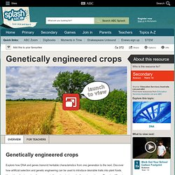 Genetically engineered crops - Science (10) - ABC Splash -