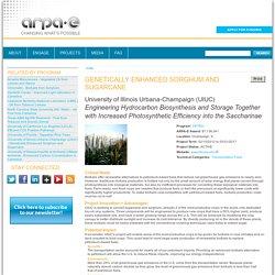 UNIVERSITY OF ILLINOIS - Programme de recherche 2002-2013 Genetically Enhanced Sorghum and Sugarcane