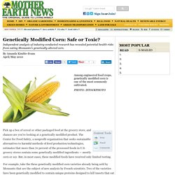 Genetically Modified Corn — Safe or Toxic?