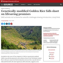 WASHINGTON UNIVERSITY IN ST.LOUIS 02/06/16 Genetically modified Golden Rice falls short on lifesaving promises GMO activists not to blame for scientific challenges slowing introduction, study finds