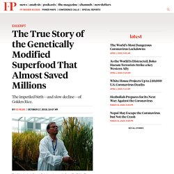 FOREIGNPOLICY 17/10/19 The True Story of the Genetically Modified Superfood That Almost Saved Millions - The imperiled birth—and slow decline—of Golden Rice.