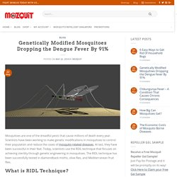 MOZQUIT 22/05/18 Genetically Modified Mosquitoes Dropping the Dengue Fever By 91%
