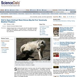Wolf In Dog's Clothing? Black Wolves May Be First 'Genetically Modified' Predators