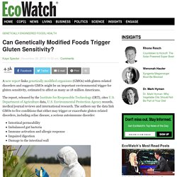 ECONEWS 26/11/13 Can Genetically Modified Foods Trigger Gluten Sensitivity?