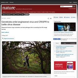 NATURE 16/05/17 Geneticists enlist engineered virus and CRISPR to battle citrus disease