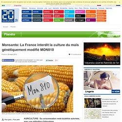Monsanto: La France interdit la culture du maïs génétiquement modifié MON810