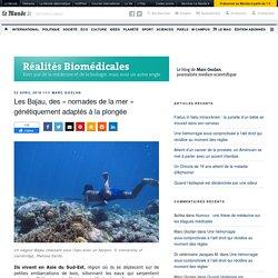 Les Bajau, des « nomades de la mer » génétiquement adaptés à la plongée – Réalités Biomédicales