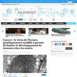 Cancer : le virus de l'herpes génétiquement modifié a permis de limiter le développement de tumeurs chez les souris
