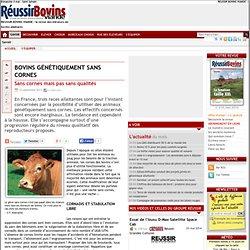 Bovins génétiquement sans cornes mais pas sans qualités - 23-09-2011 - REUSSIR BOVINS VIANDE