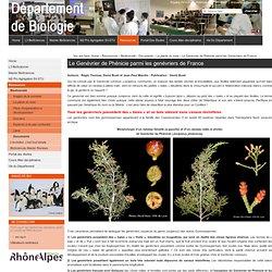Le Genévrier de Phénicie parmi les genévriers de France — Site du Département de Biologie - ENS Lyon