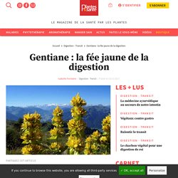 La gentiane jaune (Gentiana lutea) pour mieux digérer