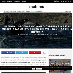 National Geographic logró capturar a estas misteriosas criaturas en un evento único en la historia