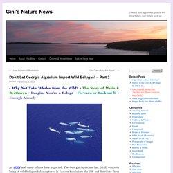 Don't Let Georgia Aquarium Import Wild Belugas! – Part 2