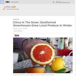 Citrus In The Snow: Geothermal Greenhouses Grow Local Produce In Winter