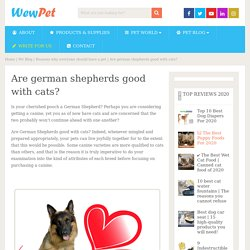 Are german shepherds good with cats? - WewPet