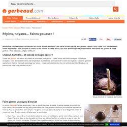 Noyaux, pépins : germinations faciles en intérieur