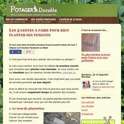 Les 5 gestes à faire pour bien planter ses tomates au potager