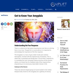 Get to Know your Amygdala