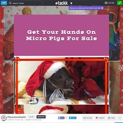 Get Your Hands On Micro Pigs For Sale