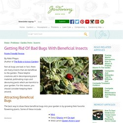 Getting Rid Of Bad Bugs With Beneficial Insects - Gardening Know How