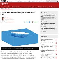 Giant 'white wanderer' poised to break free