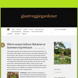 Warm season lettuce-Batavian or Summercrisp lettuces « giantveggiegardener