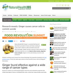 Ginger causes cancer cells to commit suicide