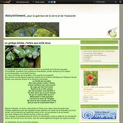 Le ginkgo biloba, l'arbre aux mille écus - Naturellement pour la guérison de la terre
