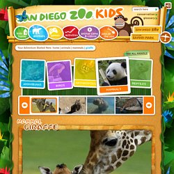 Giraffe Facts For Kids: Giraffe, Giraffe Facts, Giraffe Pictures