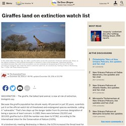 Giraffes land on extinction watch list