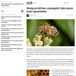 Giving an old bee a youngster's job causes brain rejuvenation