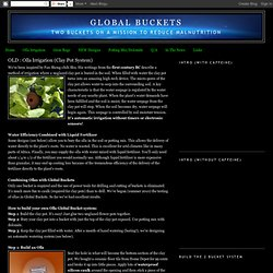 Global Buckets: Olla Irrigation (Clay Pot System)