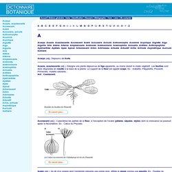 Glossaire de botanique: de Acaule à Axillaire