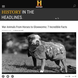 War Animals From Horses to Glowworms: 7 Incredible Facts