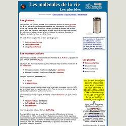 glucides-1