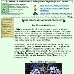 Les Glycines, La Culture de la Glycine au Québec