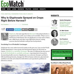 Why Is Glyphosate Sprayed on Crops Right Before Harvest?