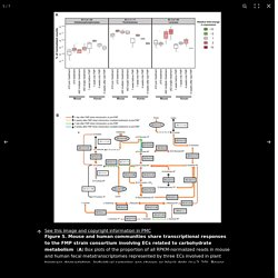 The impact of a consortium of fermented milk strains on the gut microbiome of gnotobiotic mice and monozygotic twins - PubMed