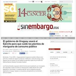 El gobierno de Uruguay usará al Ejército para que cuide los plantíos de mariguana de consumo público
