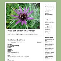 Gödsla med åkerfräken – Vilda och odlade köksväxter