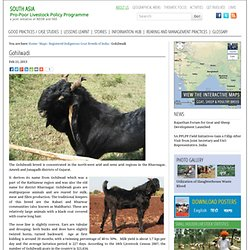 Gohilwadi — South Asia Pro-Poor Livestock Policy Programme